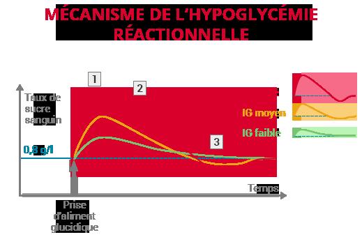 mécanisme hypoglycémie réactionne